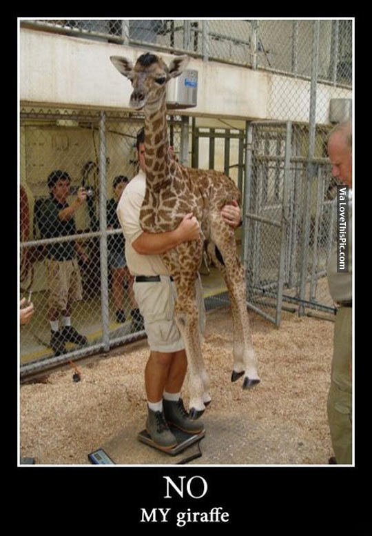 Oh No My Brother, You Gots Ta Get Your Own Giraffe