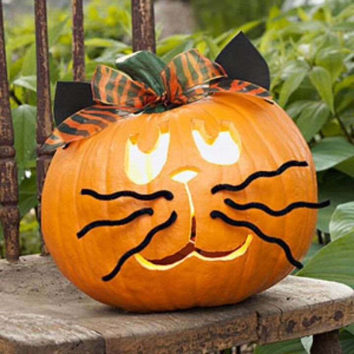 Easy Adorable No Carve Kitty Pumpkin Pictures Photos And