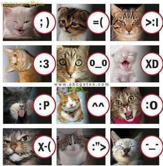 Cat Meme To Faces Pictures Photos And Images For