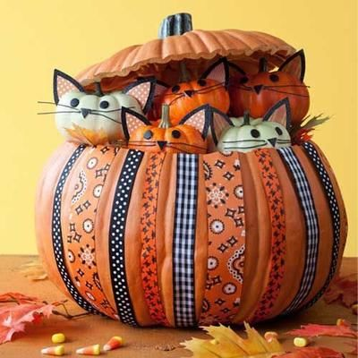 pumpkin full of pumpkin kittens pictures photos and