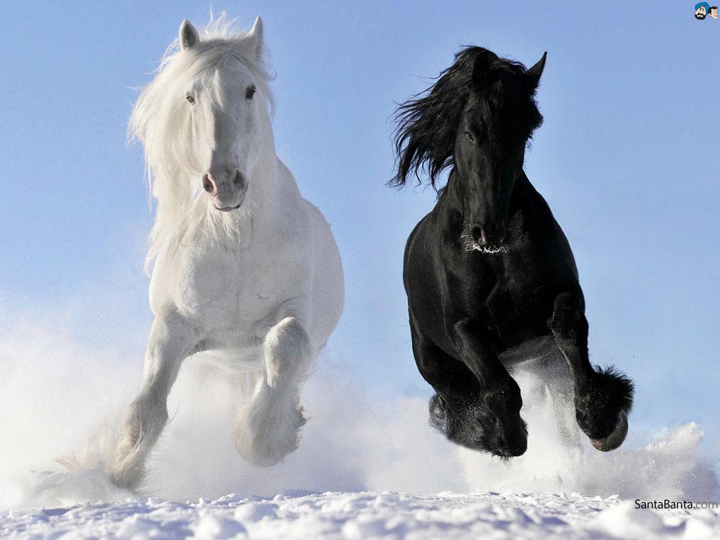 Three White Horses Painting by Vanny Sok | 768x1024