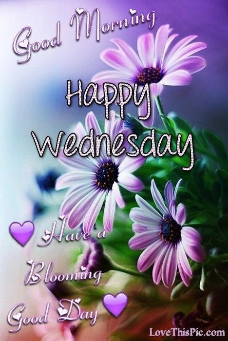 Good Morning Happy Wednesday Have A Blooming Good Day