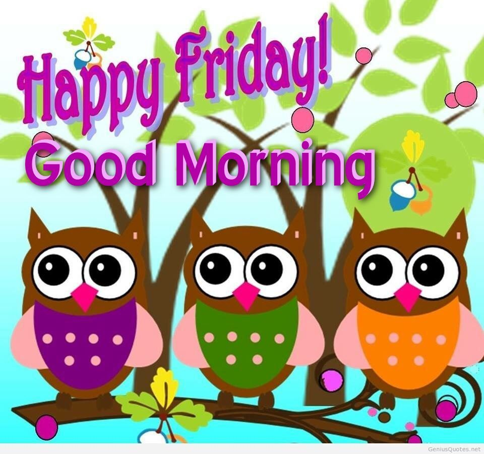 Happy Friday Good Morning Owls Pictures Photos And Images For Facebook Tumblr Pinterest And Twitter