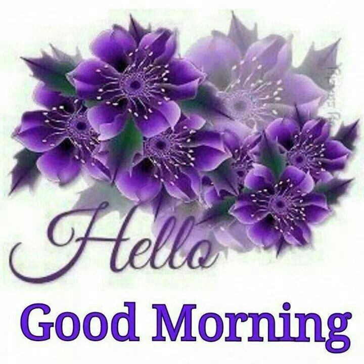 Hello Good Morning Pictures Photos And Images For
