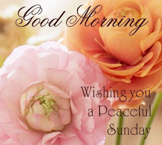 good morning wishing you a peaceful sunday quote