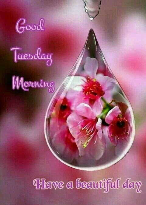 Good Morning Tuesday Images : Good tuesday morning pictures photos and images for