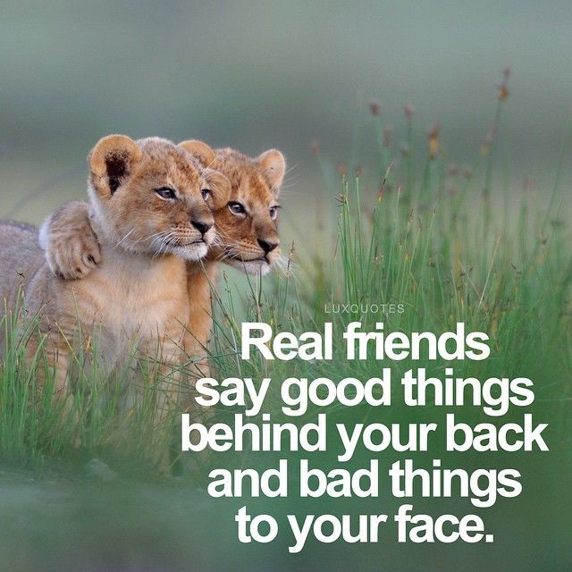 real friend Real friends song lyrics collection browse 56 lyrics and 30 real friends albums.