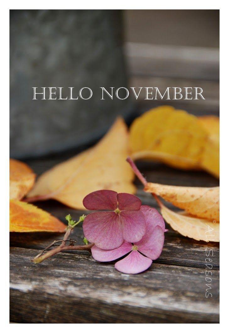 hello november itsnasb - photo #2