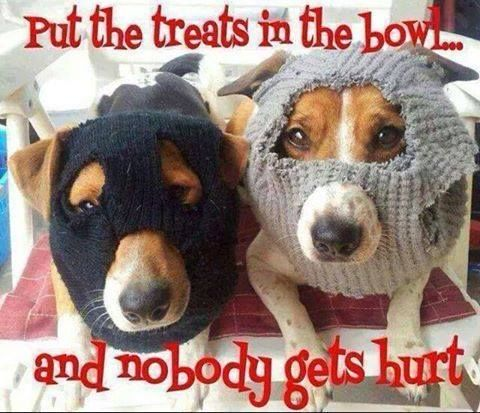 Put The Treats In Th Bowl And Nobody Gets Hurt Pictures ...