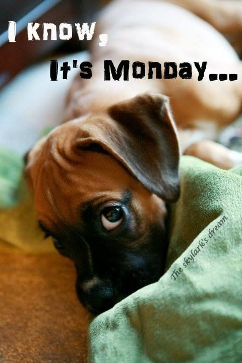 I Know Its Monday Pictures, Photos, and Images for