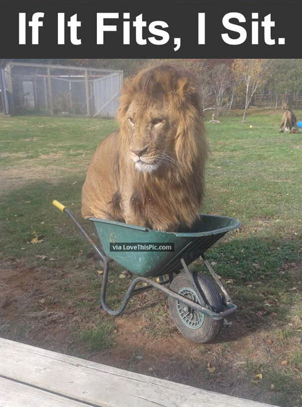 If It Fits I Sits Pictures Photos And Images For Facebook Tumblr Pinterest And Twitter