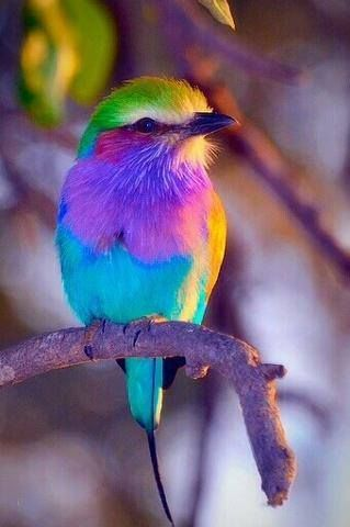 Colorful Bird Pictures Photos And Images For Facebook