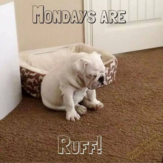 Good Morning Monday In French : Mondays are ruff pictures photos and images for facebook