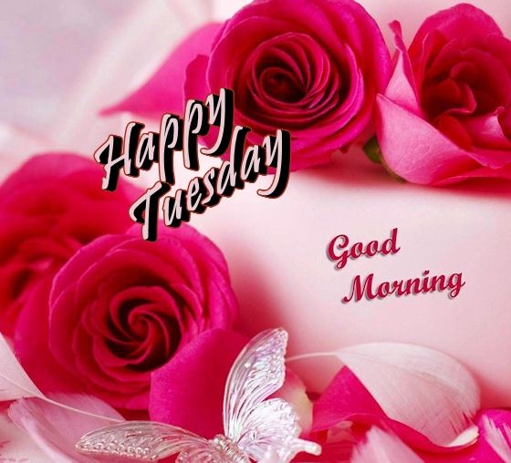 Image result for gif happy tuesday images