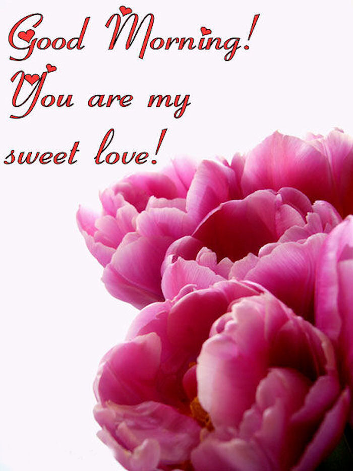 good morning you are my sweet love pictures photos and images for