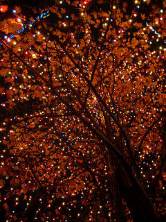 Beautiful Christmas Lights In The Tree