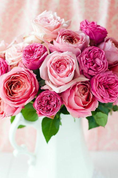 Beautiful Pink Roses Images Beautiful Pink Roses P...