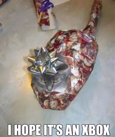 Funny Christmas Cat Pictures, Photos, and Images for Facebook ...