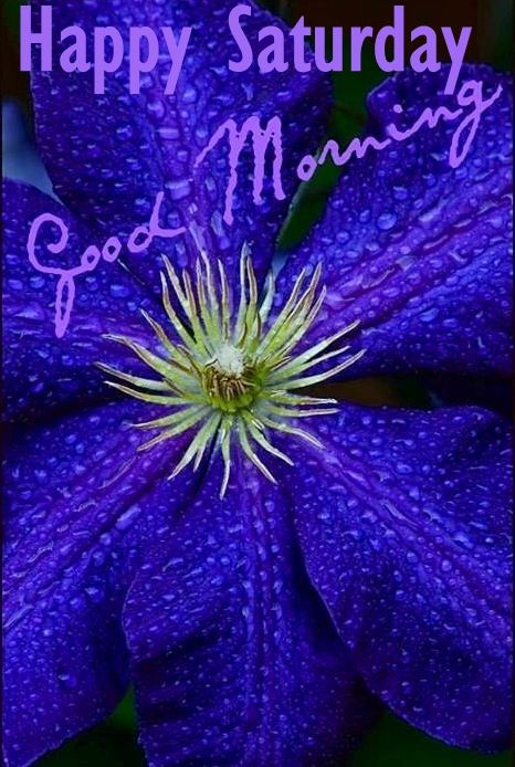 Good Morning Saturday Purple : Happy saturday good morning flowers pictures photos and
