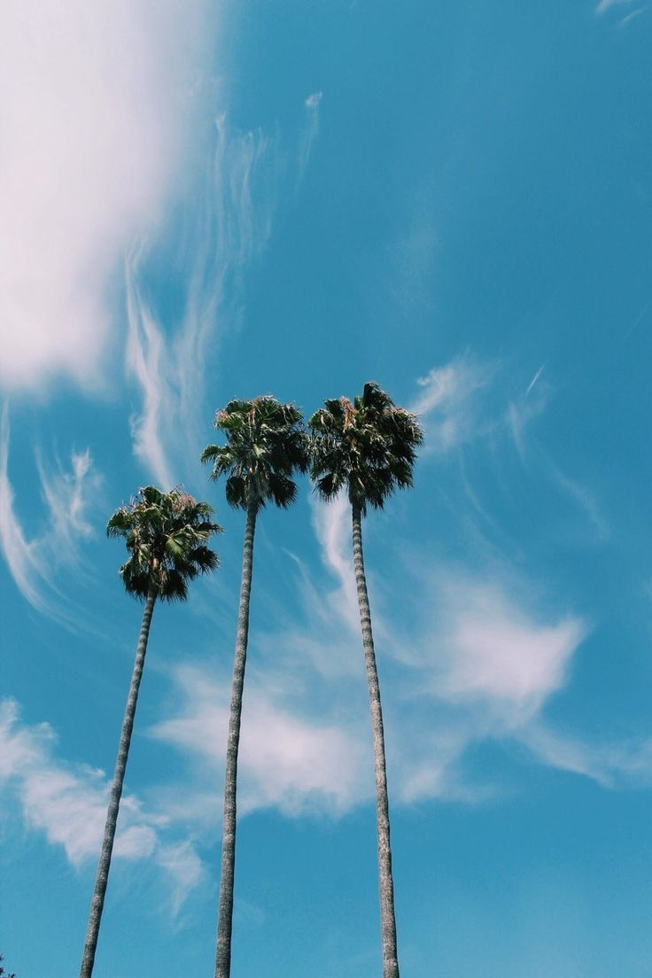 Beautiful Palm Tree Pictures Photos And Images For