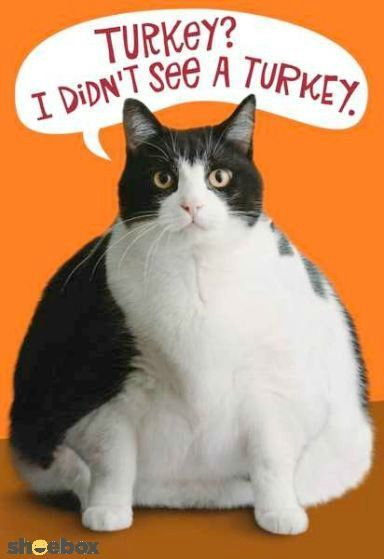 funny cat thanksgiving quote pictures photos and images