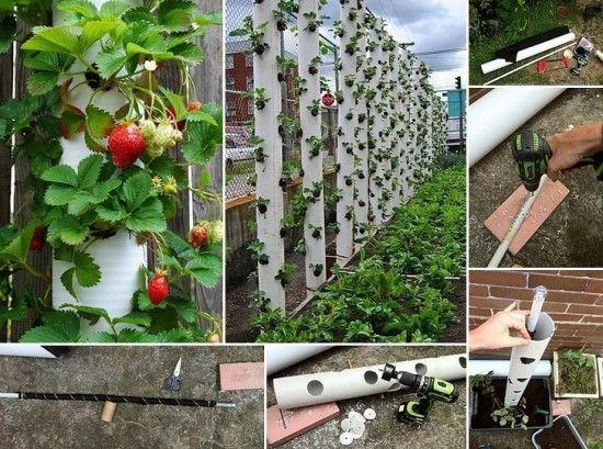 Конструкция для выращивание клубники