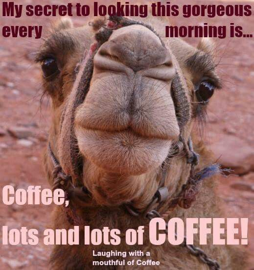 Hump Day Camel Funny Wednesday Coffee Quote