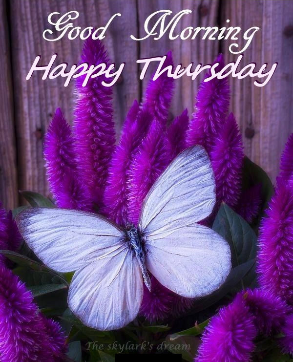 Resultado de imagen de happy thursday flowers animals