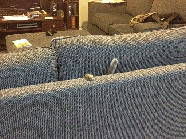 J'ai besoin d'attention. - Page 2 216009-Pls-Halp-I-m-Stuck-In-The-Couch