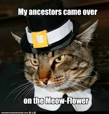 My Ancestors Came Over On The Meow Flower Pictures Photos