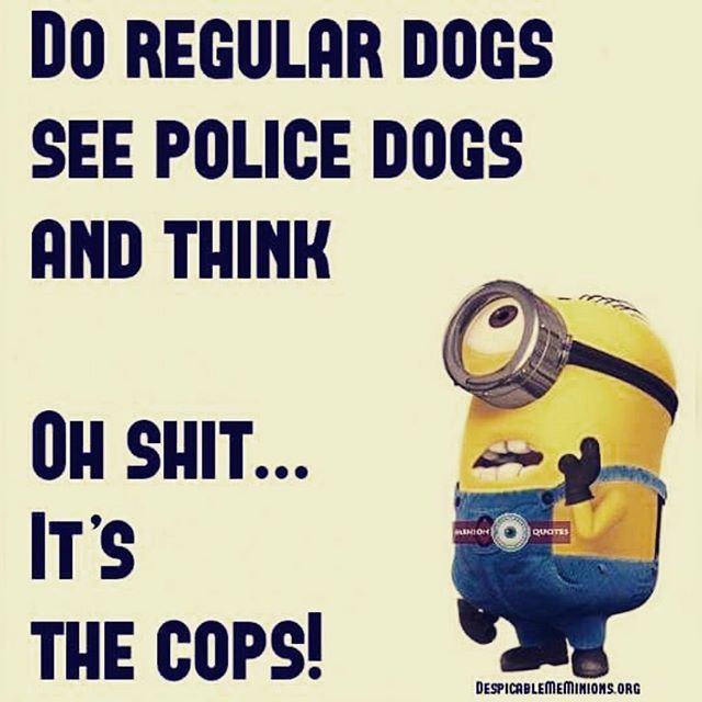 Do Regular Dogs See Police Dogs And Think Oh Shit Its The
