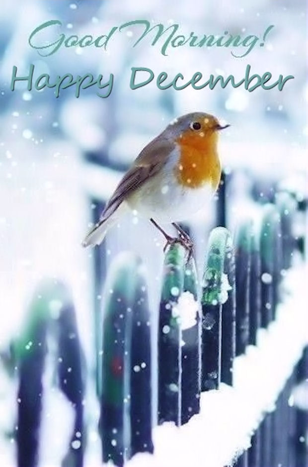 Good Morning Happy December Pictures Photos And Images For