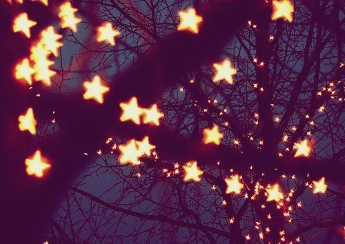 Star Lights In Trees