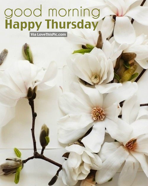 Good Morning Happy Thursday : Good morning happy thursday pictures photos and images