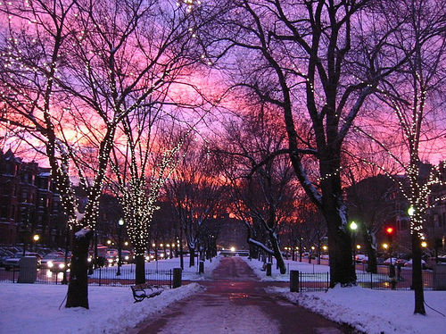 Pink Winter Pictures, Photos, and Images for Facebook ... Pictures Trees In Winter Pinterest