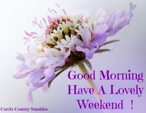 good morning have a lovely weekend quote