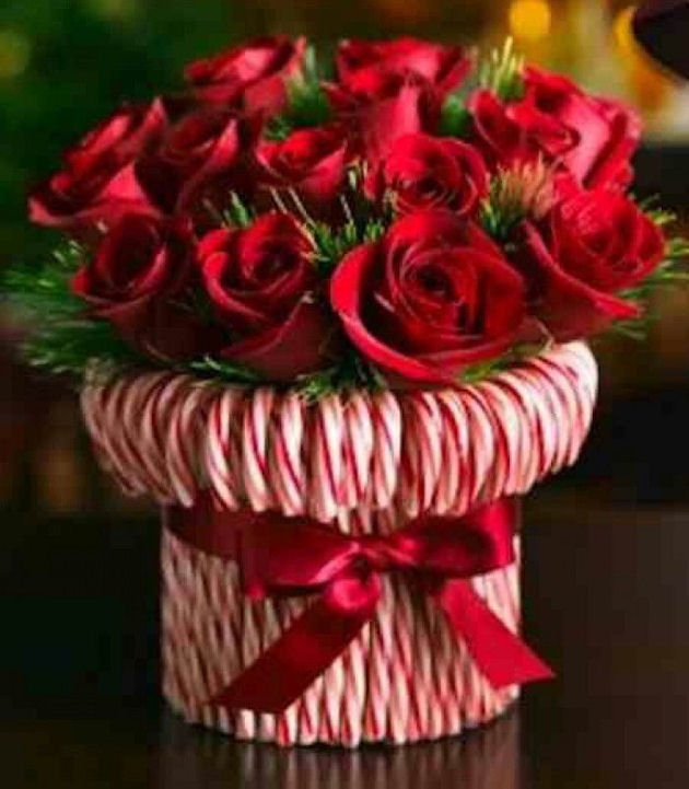 Candy cane rose bouquet pictures photos and images for