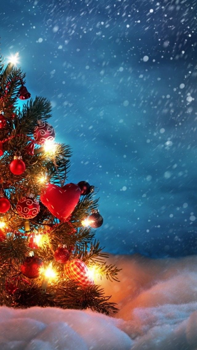 Outdoor Christmas Tree Wallpaper Pictures Photos And