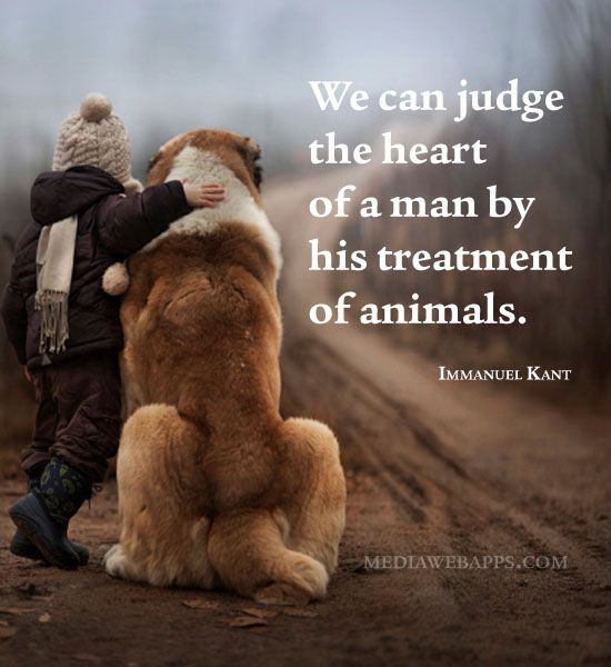 Pictures Of Animals With Quotes: We Can Judge The Heart Of A Man By How He Treats Animals