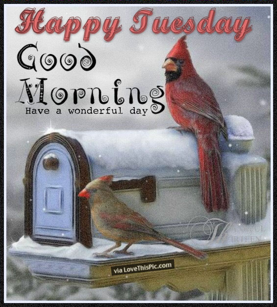 Winter Happy Tuesday Good Morning Quote Pictures, Photos