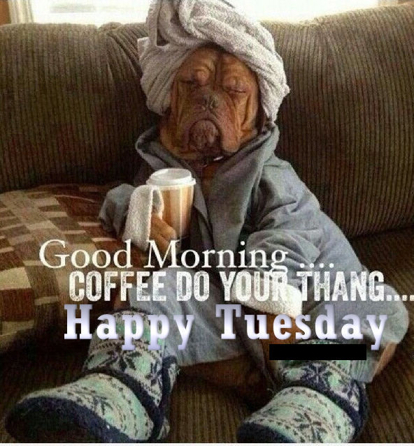 happy tuesday images funny