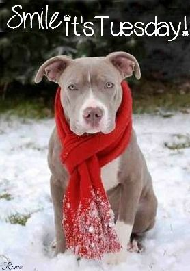 Smile Its Tuesday Quote With Pit Bull Pictures, Photos, and ...