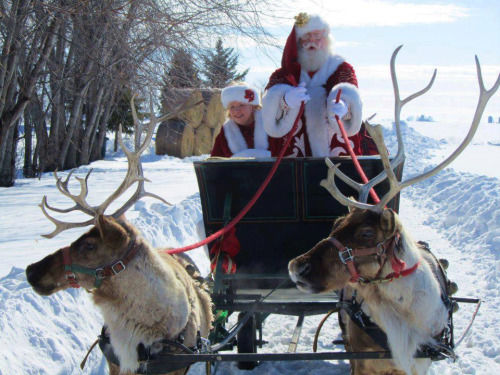 Mr Mrs Claus And Their Reindeers Pictures Photos And