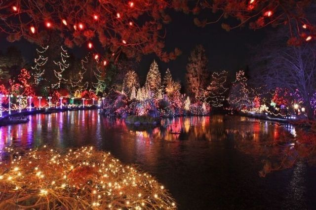 Christmas Lights on the Lake & Christmas Lights On The Lake Pictures Photos and Images for ... azcodes.com
