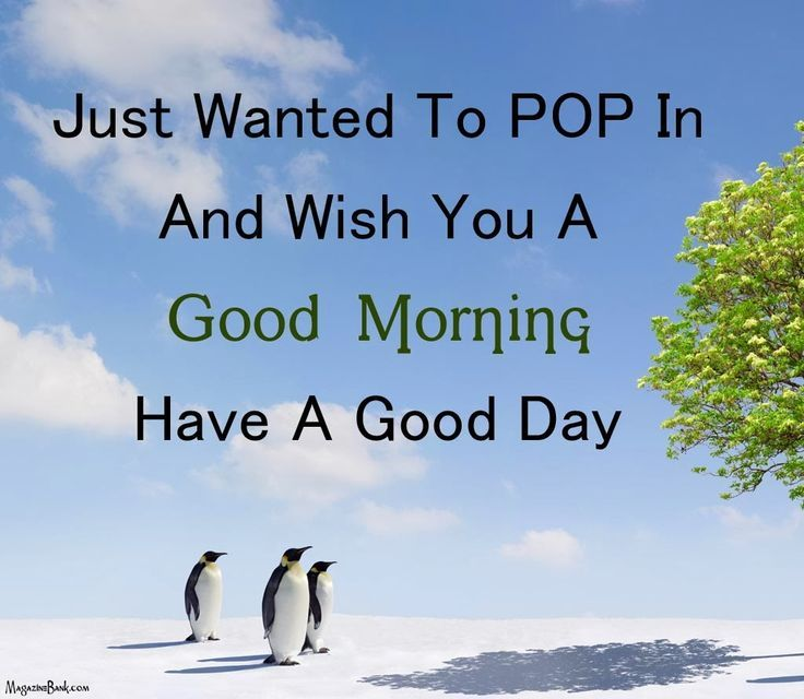 Have A Good Day Honey Quotes: Just Wanted To Pop In And Say Good Morning Pictures