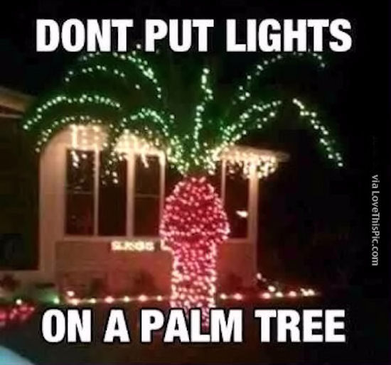 Christmas Lights In Palm Trees.Why You Should Not Put Christmas Lights On A Palm Tree