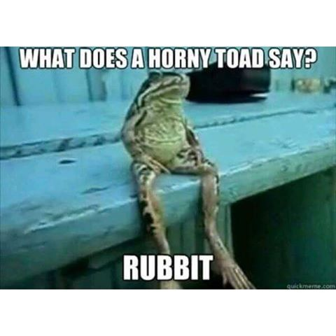 What Does A Horny Toad Say? Pictures, Photos, and Images for ...