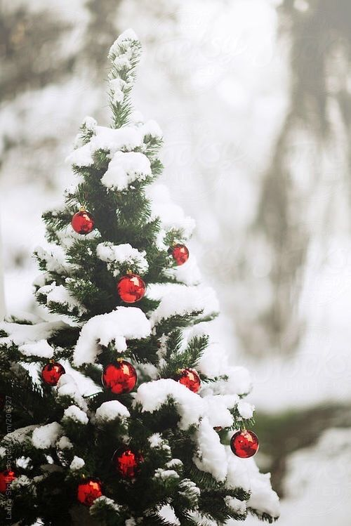 Christmas Tree Outside.Decorated Christmas Tree Outside Pictures Photos And