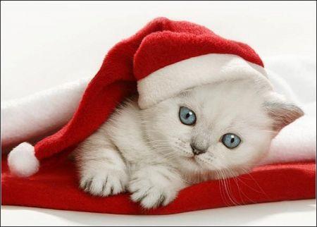 Santa Kitty - Cutest Paw