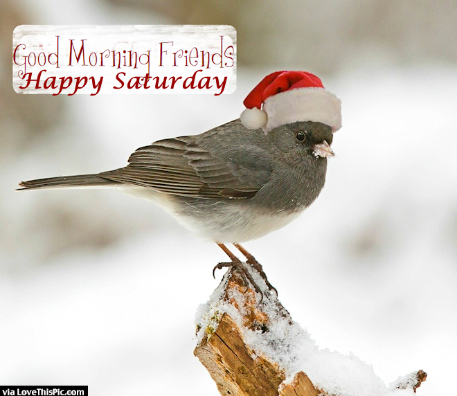 Good Morning Saturday Friends Images : Good morning friends happy saturday pictures photos and